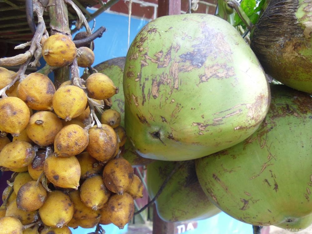 Karaibski kokos